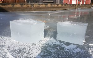 First ice blocks harvested from the pond on Jan. 29.