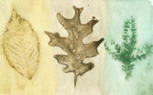 Leaf Trio artwork by Lisa Tessier